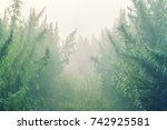 plantation of cannabis in the... | Shutterstock . vector #742925581
