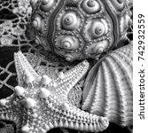 Black And White Closeup Of Sea...