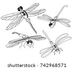 set of monochrome dragonflies. | Shutterstock .eps vector #742968571
