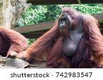 horizontal full length photo of ... | Shutterstock . vector #742983547