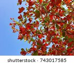 Small photo of Leaves are changing color from green to red and orange or brown because of its hormone, Abscisic acid, in fall season.