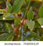 water droplets  leaves