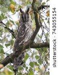 northern long eared owl in a... | Shutterstock . vector #743055154