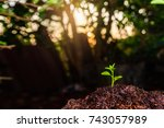the seedling are growing in the ... | Shutterstock . vector #743057989