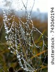 spiderweb with droplets of dew | Shutterstock . vector #743060194