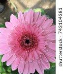 pink starburst flower in the...