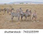 zebras in the dust  serengeti ... | Shutterstock . vector #743105599