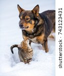 Stock photo big dog playing with cat outdoor in the snow in winter 743123431