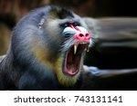 Mandril  Monkey Mandril Open...