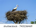 stork nest and storks in the... | Shutterstock . vector #743136469
