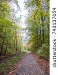 ghost woods in nienhagen | Shutterstock . vector #743137054