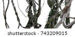 twisted wild liana messy jungle ... | Shutterstock . vector #743209015