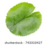 Leaf Off Water Lily Isolated On ...