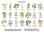 Best Sedatives Herbs. Hand...
