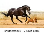 Stock photo black horse galloping with dog 743351281