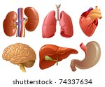 internal organs | Shutterstock .eps vector #74337634