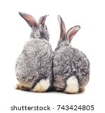 grey baby rabbits on a white...   Shutterstock . vector #743424805