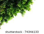 Leaves With Isolated Background