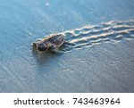 Stock photo baby sea turtle tracks at sunrise 743463964