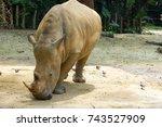 the white rhinoceros or square... | Shutterstock . vector #743527909
