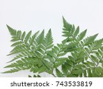 fern leaf isolated on white... | Shutterstock . vector #743533819