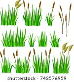 a set of reeds  grass and canes ... | Shutterstock .eps vector #743576959
