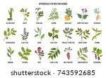 best herbal aphrodisiacs. hand... | Shutterstock .eps vector #743592685