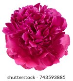 peony bud petals red and pink... | Shutterstock . vector #743593885