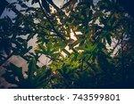 equatorial vegetation | Shutterstock . vector #743599801