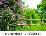 flowering lilac with old wooden ... | Shutterstock . vector #743665654