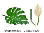 monstera large tropical leaf... | Shutterstock . vector #743684521
