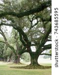 Small photo of NEW ORLEANS, USA - 2 JANUARY 2015: Big oaks trees at Oak Alley Plantation
