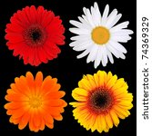 collection of colored blooms... | Shutterstock . vector #74369329