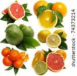 fruits citrus | Shutterstock . vector #74373214