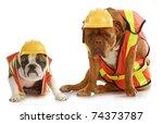 Working Dogs   English Bulldog...