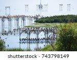 """bird paradise """"kus cenneti"""" ...   Shutterstock . vector #743798149"""