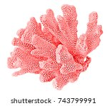 coral on white background | Shutterstock . vector #743799991