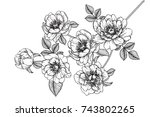flowers drawing with line art... | Shutterstock .eps vector #743802265