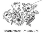flowers drawing with line art... | Shutterstock .eps vector #743802271