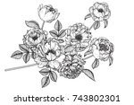 flowers drawing with line art... | Shutterstock .eps vector #743802301
