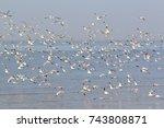 flock of seagulls flying over... | Shutterstock . vector #743808871