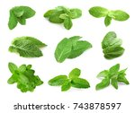 fresh mint leaves on white... | Shutterstock . vector #743878597