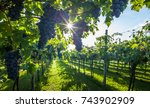 grape harvest | Shutterstock . vector #743902909