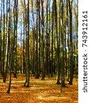 beautiful autumnal beech forest | Shutterstock . vector #743912161