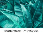 tropical banana leaf texture ... | Shutterstock . vector #743959951