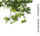 tree branch isolated   Shutterstock . vector #743963917