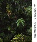 dark jungle leaves | Shutterstock . vector #743982379
