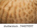 Cute Cat Background.close Up...