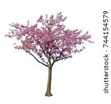 japanese sakura flower  pink... | Shutterstock . vector #744154579
