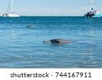 Happy Dolphin In Monkey Mia Ba...